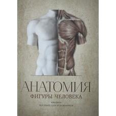 Анатомия фигуры человека. Краткое пособие для художников
